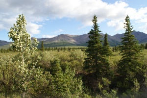 A corner of Denali National Park
